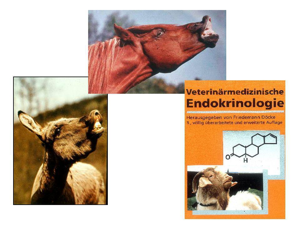Vomeronasales Organ (VNO) akzessorisches olfaktorisches Organ besteht aus blind endenden Schläuchen, deren Öffnungen mit Nase- und Rachenhöhle in Verbindung stehen das Lumen des VNO enthält olfaktorische Rezeptorzellen
