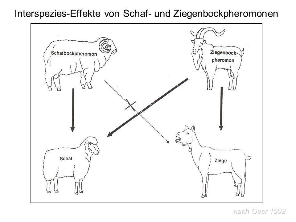 Interspezies-Effekte von Schaf- und Ziegenbockpheromonen nach Over 1992