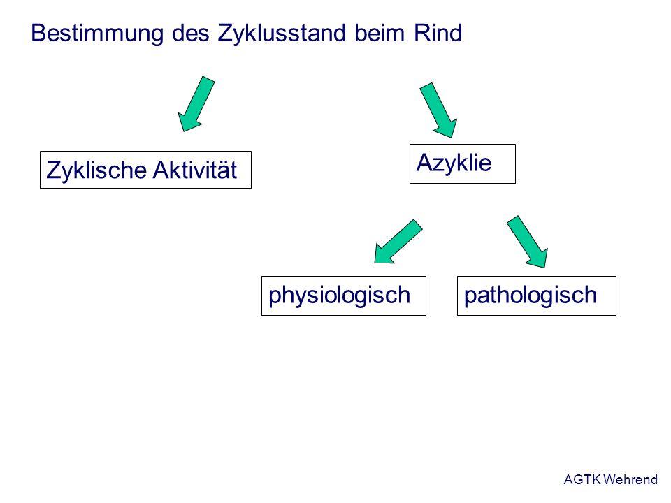 AGTK Wehrend Bestimmung des Zyklusstand beim Rind Azyklie physiologischpathologisch Zyklische Aktivität
