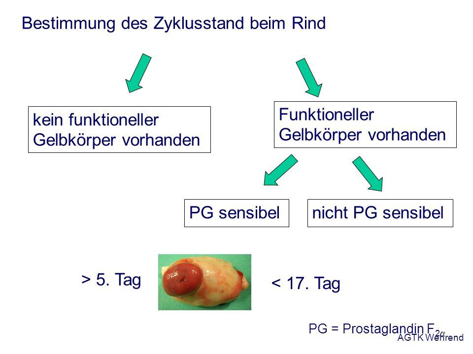 AGTK Wehrend Bestimmung des Zyklusstand beim Rind Funktioneller Gelbkörper vorhanden PG sensibelnicht PG sensibel PG = Prostaglandin F 2 kein funktion