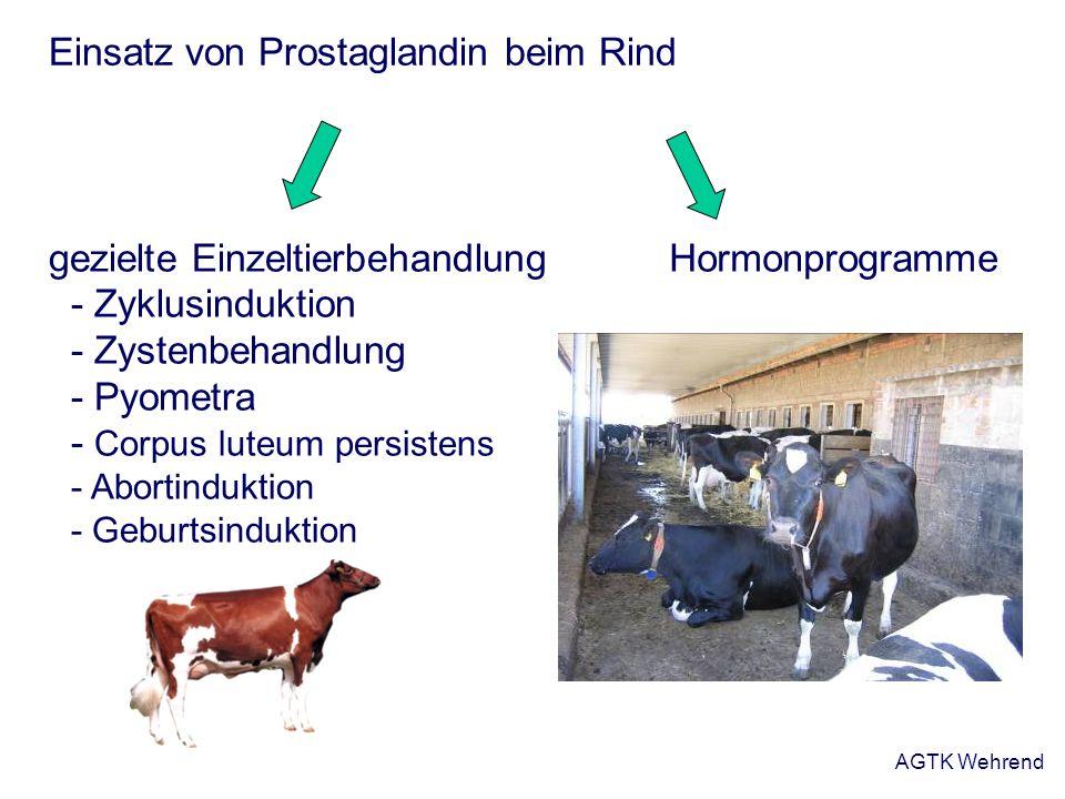 AGTK Wehrend Einsatz von Prostaglandin beim Rind Hormonprogrammegezielte Einzeltierbehandlung - Zyklusinduktion - Zystenbehandlung - Pyometra - Corpus