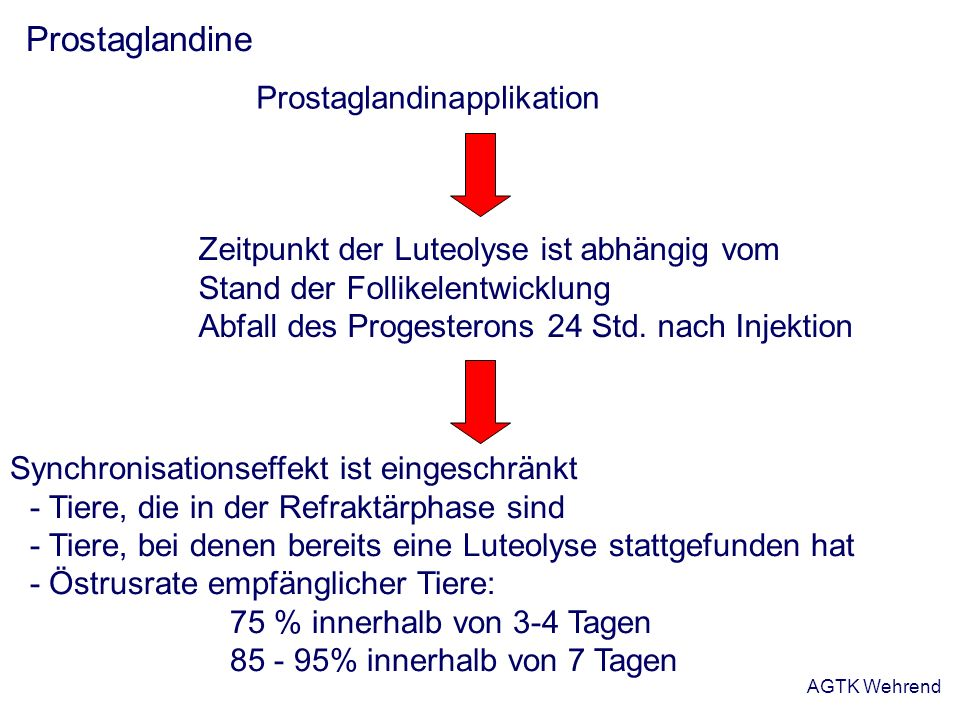 AGTK Wehrend Prostaglandine Prostaglandinapplikation Zeitpunkt der Luteolyse ist abhängig vom Stand der Follikelentwicklung Abfall des Progesterons 24