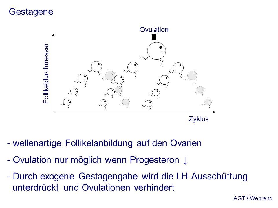 AGTK Wehrend Gestagene - wellenartige Follikelanbildung auf den Ovarien - Ovulation nur möglich wenn Progesteron - Durch exogene Gestagengabe wird die