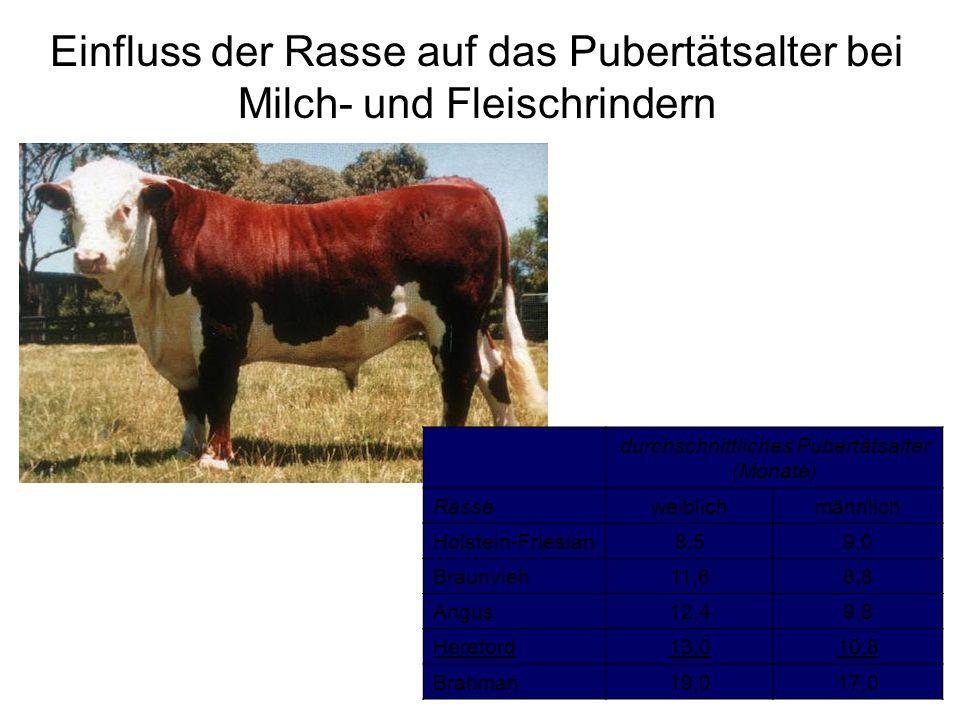 Einfluss der Rasse auf das Pubertätsalter bei Milch- und Fleischrindern durchschnittliches Pubertätsalter (Monate) Rasseweiblichmännlich Holstein-Frie