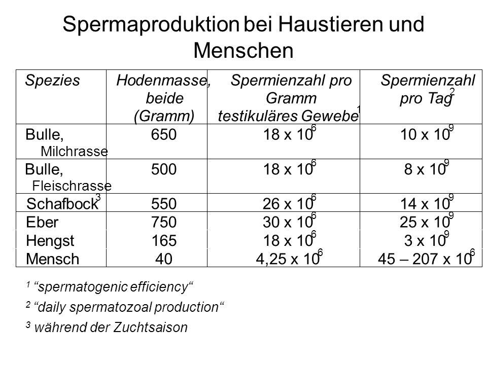 Spermaproduktion bei Haustieren und Menschen 1 spermatogenic efficiency 2 daily spermatozoal production 3 während der Zuchtsaison