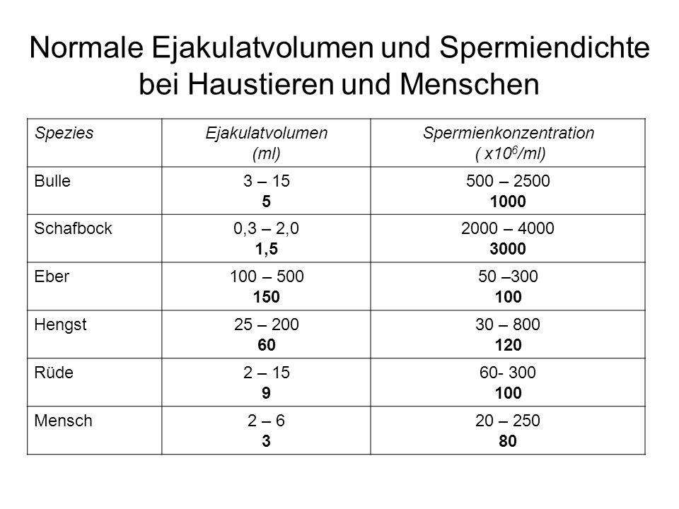 Normale Ejakulatvolumen und Spermiendichte bei Haustieren und Menschen SpeziesEjakulatvolumen (ml) Spermienkonzentration ( x10 6 /ml) Bulle3 – 15 5 50