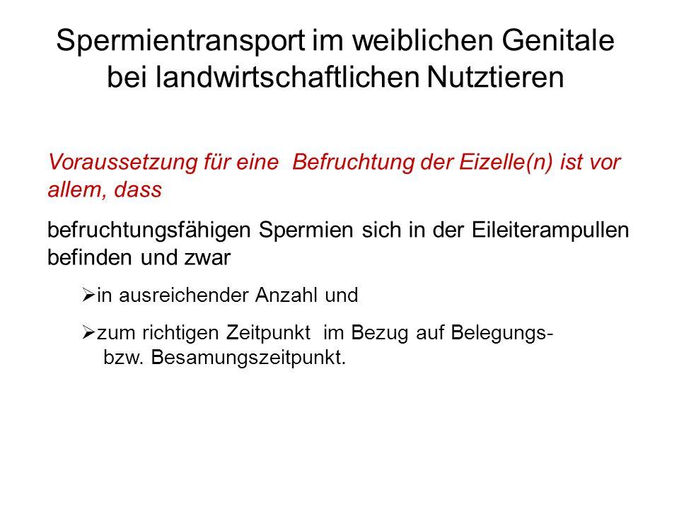 Spermientransport im weiblichen Genitale bei landwirtschaftlichen Nutztieren Voraussetzung für eine Befruchtung der Eizelle(n) ist vor allem, dass bef