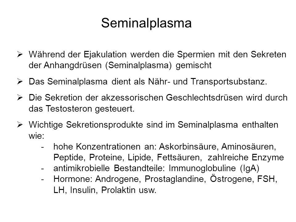 Seminalplasma Während der Ejakulation werden die Spermien mit den Sekreten der Anhangdrüsen (Seminalplasma) gemischt Das Seminalplasma dient als Nähr-