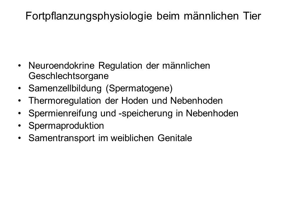 Neuroendokrine Regulation der männlichen Geschlechtsorgane Samenzellbildung (Spermatogene) Thermoregulation der Hoden und Nebenhoden Spermienreifung u