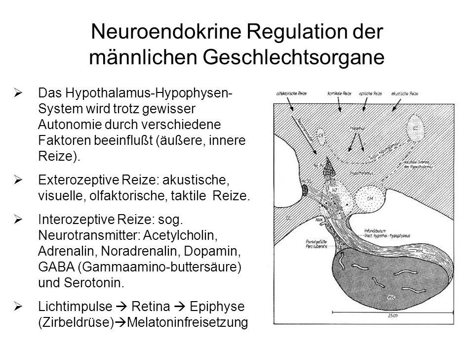 Neuroendokrine Regulation der männlichen Geschlechtsorgane Das Hypothalamus-Hypophysen- System wird trotz gewisser Autonomie durch verschiedene Faktor