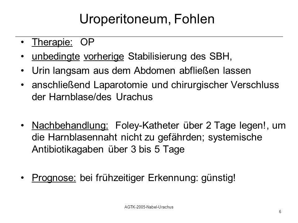 AGTK-2005-Nabel-Urachus 6 Uroperitoneum, Fohlen Therapie:OP unbedingte vorherige Stabilisierung des SBH, Urin langsam aus dem Abdomen abfließen lassen
