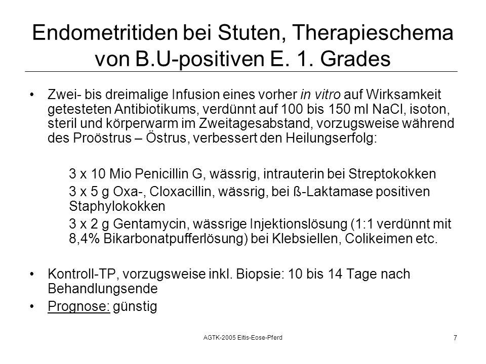 AGTK-2005 Eitis-Eose-Pferd 7 Endometritiden bei Stuten, Therapieschema von B.U-positiven E.