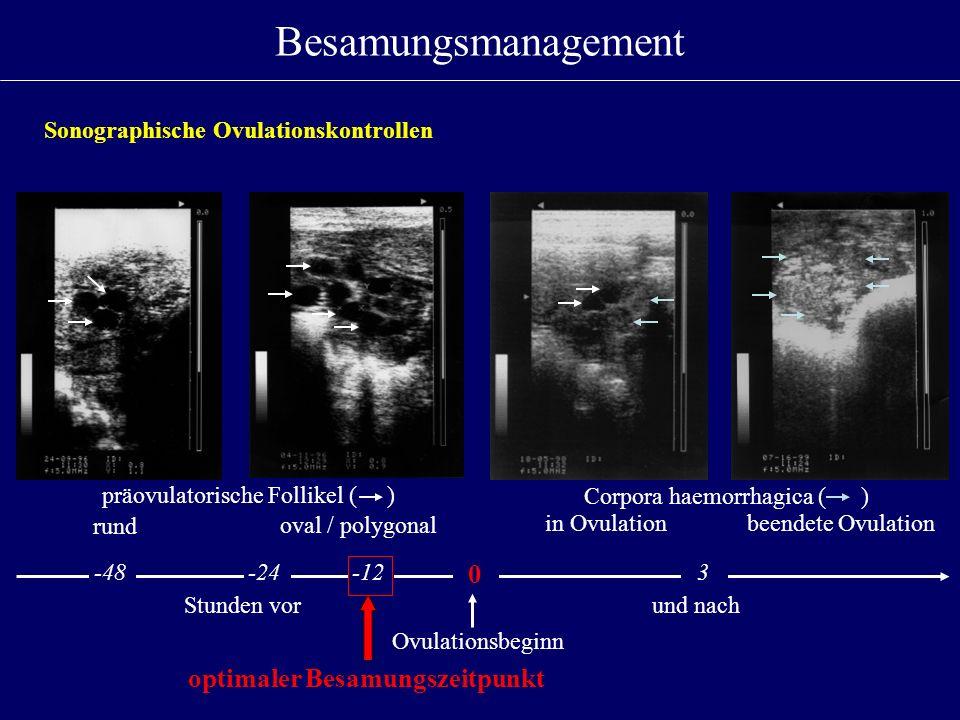 Besamungsmanagement Ovulationsbeginn Stunden vor und nach rund oval / polygonal in Ovulationbeendete Ovulation -48 -24-12 0 3 präovulatorische Follike