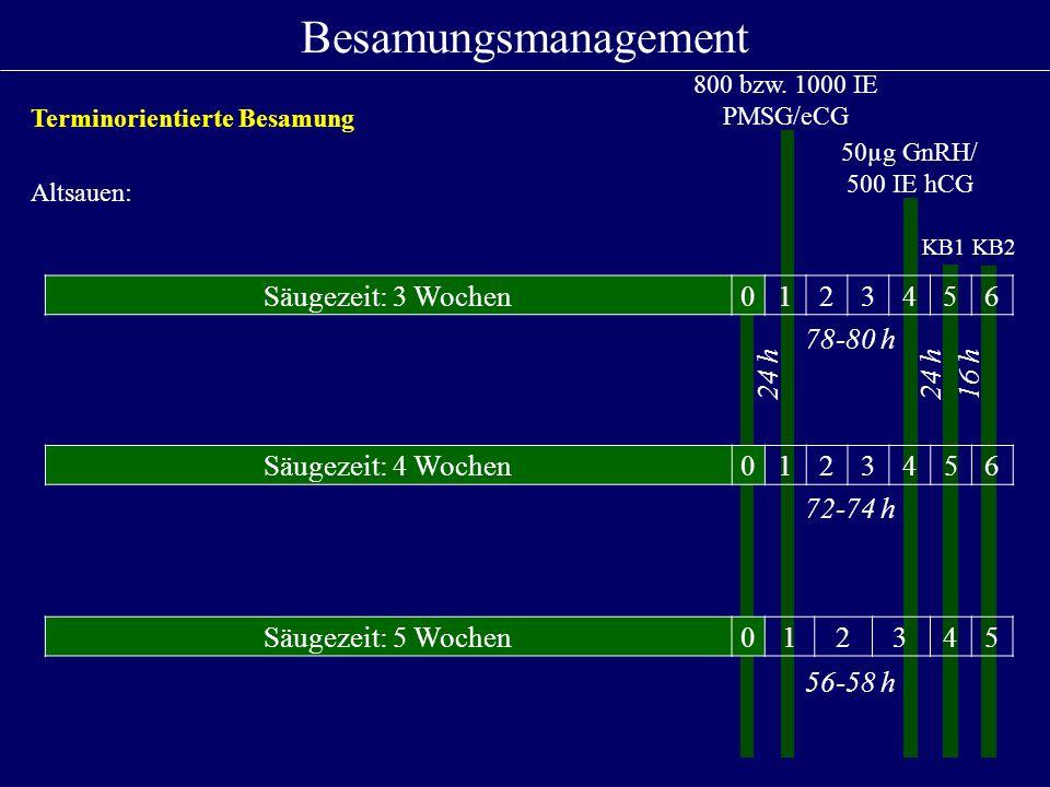 Säugezeit: 3 Wochen0123456 24 h 78-80 h 24 h16 h 800 bzw. 1000 IE PMSG/eCG 50µg GnRH/ 500 IE hCG Besamungsmanagement KB1KB2 Altsauen: Säugezeit: 4 Woc