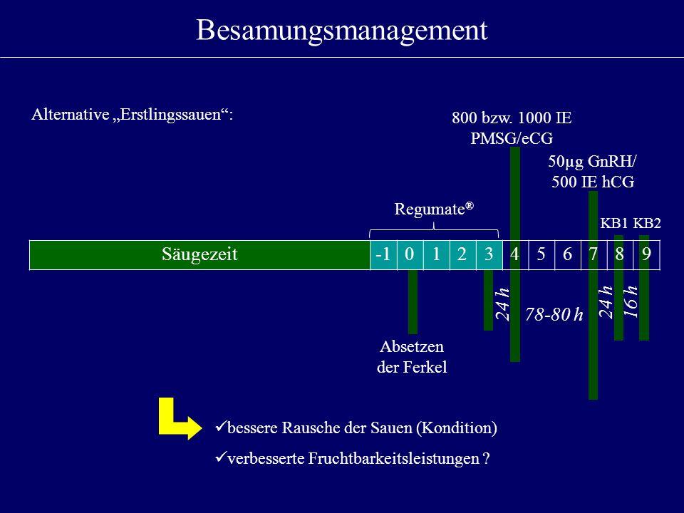 Besamungsmanagement Regumate ® 24 h 78-80 h 800 bzw. 1000 IE PMSG/eCG 50µg GnRH/ 500 IE hCG KB1KB2 Säugezeit0123456789 24 h16 h Alternative Erstlingss