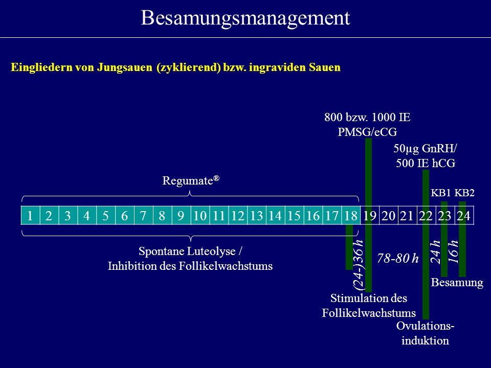 123456789101112131415161718192021222324 (24-)36 h 78-80 h 24 h16 h 800 bzw. 1000 IE PMSG/eCG 50µg GnRH/ 500 IE hCG Besamungsmanagement Spontane Luteol