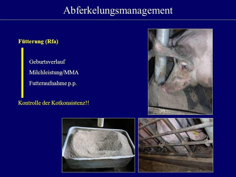 Abferkelungsmanagement Fütterung (Rfa) Geburtsverlauf Milchleistung/MMA Futteraufnahme p.p. Kontrolle der Kotkonsistenz!!