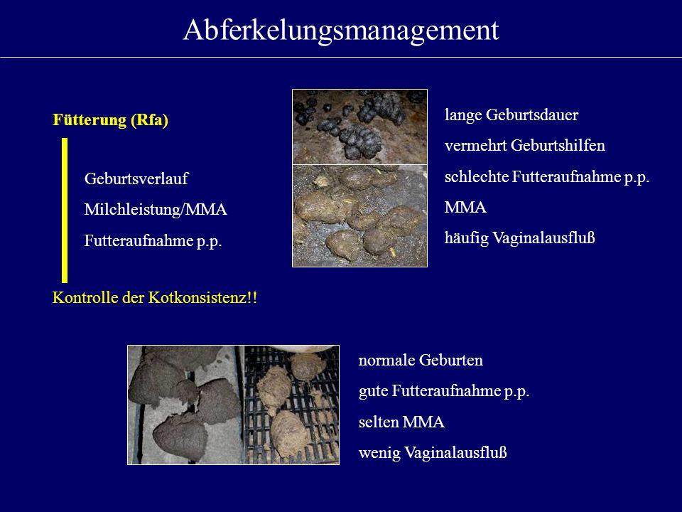 Abferkelungsmanagement Fütterung (Rfa) Geburtsverlauf Milchleistung/MMA Futteraufnahme p.p. Kontrolle der Kotkonsistenz!! lange Geburtsdauer vermehrt