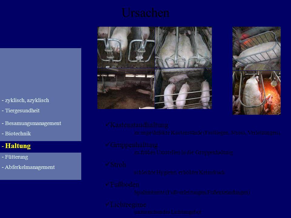 Abferkelungsmanagement Fütterung Geburtsverlauf Milchleistung/MMA Futteraufnahme p.p.