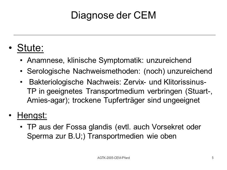 AGTK-2005-CEM-Pferd6 Therapie der CEM Stute: tägliche intrauterine Therapie mit 5 bis 10 Mio i.