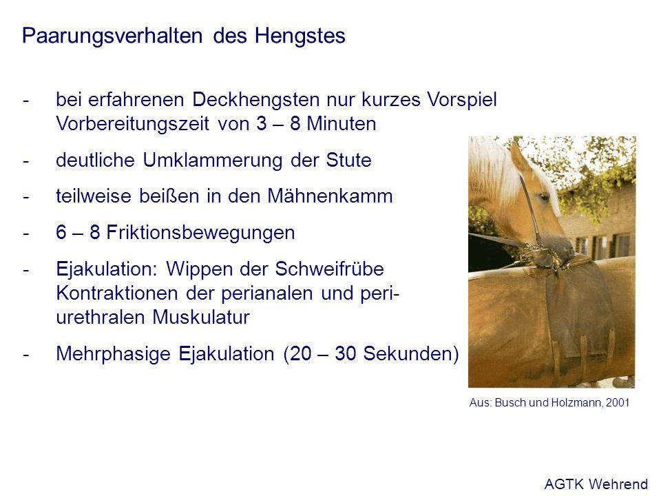 Paarungsverhalten des Hengstes -bei erfahrenen Deckhengsten nur kurzes Vorspiel Vorbereitungszeit von 3 – 8 Minuten -deutliche Umklammerung der Stute -teilweise beißen in den Mähnenkamm -6 – 8 Friktionsbewegungen -Ejakulation: Wippen der Schweifrübe Kontraktionen der perianalen und peri- urethralen Muskulatur -Mehrphasige Ejakulation (20 – 30 Sekunden) Aus: Busch und Holzmann, 2001 AGTK Wehrend