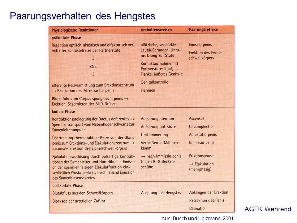 Paarungsverhalten des Hengstes Aus: Busch und Holzmann, 2001 AGTK Wehrend