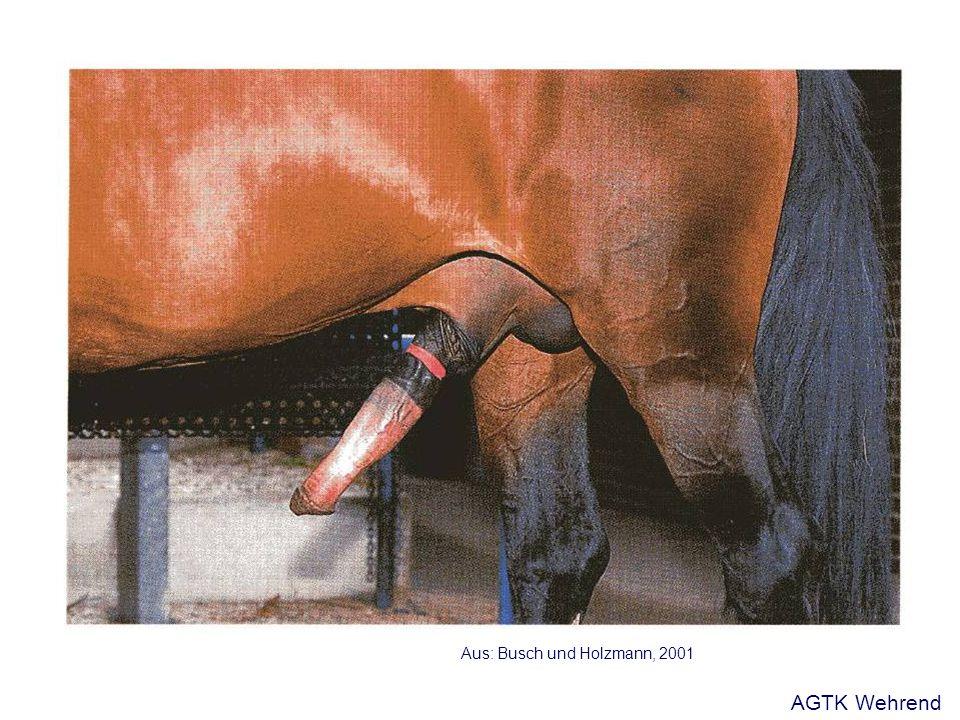 Aus: Busch und Holzmann, 2001 AGTK Wehrend