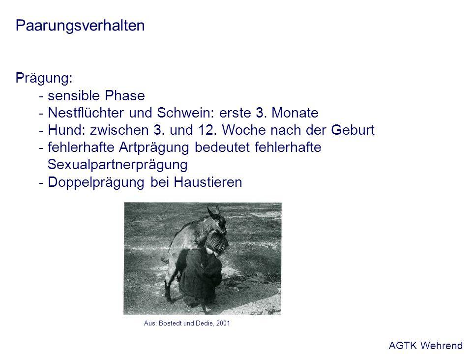 Paarungsverhalten Prägung: - sensible Phase - Nestflüchter und Schwein: erste 3.