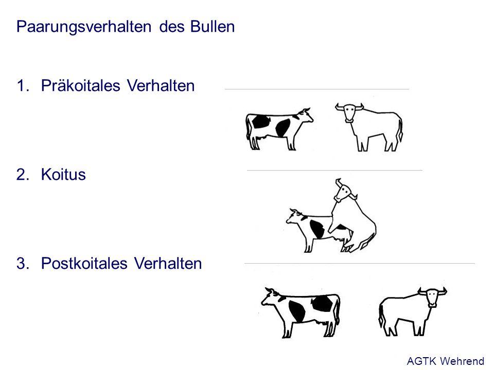 Paarungsverhalten des Bullen 1.Präkoitales Verhalten 2.Koitus 3.Postkoitales Verhalten AGTK Wehrend