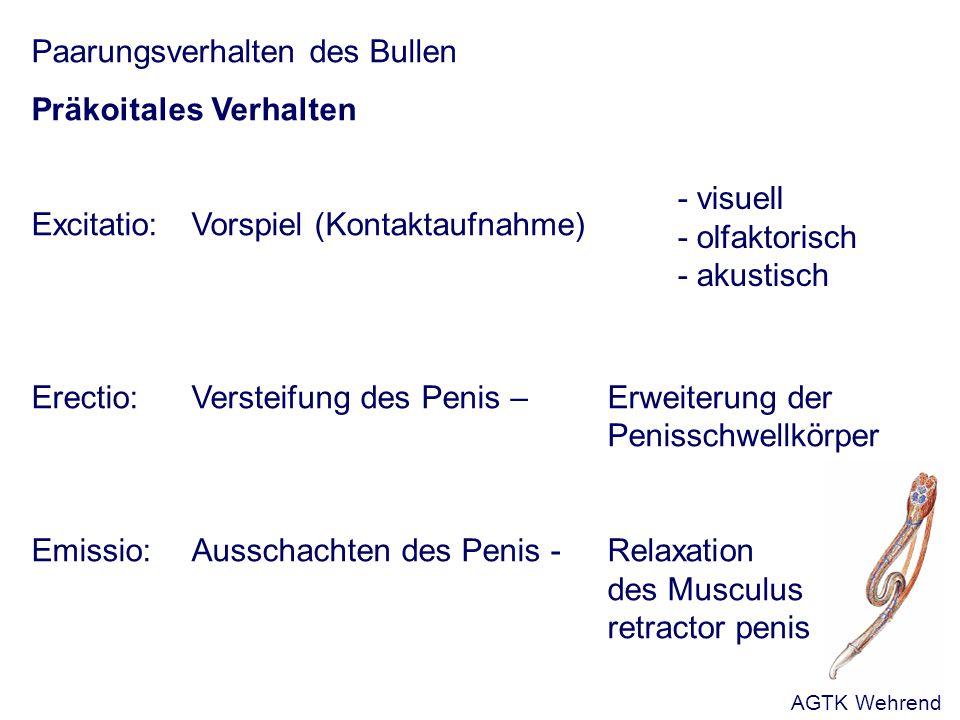 Erworbene Störungen der Libido sexualis - Veränderte Bedingungen beim Paarungsablauf - Wechsel von Bedeckung auf Desemination - Alter - höhere Reizerwartung - individuelle Vorlieben - Intensität der Vorbereitung - Deckplatz - Vagineninnentemperatur - extragenitale Erkrankungen - Personalwechsel - Veränderungen der Haltungsbedingungen (Unterbringung, Fütterung) AGTK Wehrend