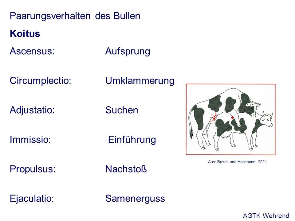 Fragen - Beschreibe die Paarungsreflexkette beim Bullen, Hengst und Eber.
