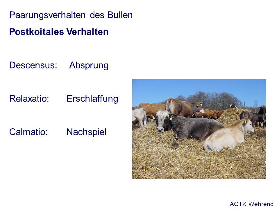 Paarungsverhalten des Ziegenbockes Aus: Busch und Holzmann, 2001 a.Anstoßen des weiblichen Tieres b.Paradeschritt c.