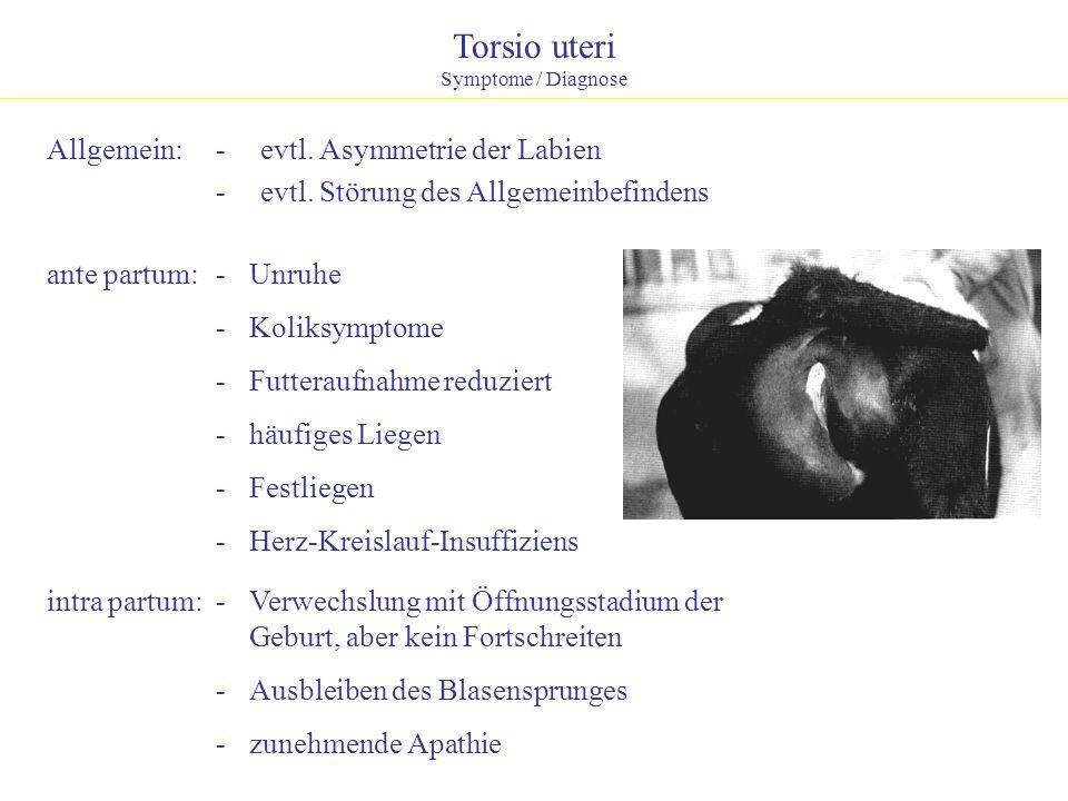 Torsio uteri Symptome / Diagnose Allgemein:- evtl. Asymmetrie der Labien - evtl. Störung des Allgemeinbefindens ante partum:- Unruhe - Koliksymptome -