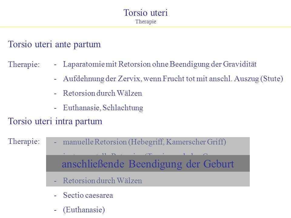 Torsio uteri Therapie Therapie: - manuelle Retorsion (Hebegriff, Kamerscher Griff) - instrumentelle Retorsion (Torsionsgabel n. Caemmerer, Torsionshak