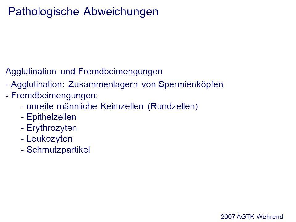 Pathologische Abweichungen Agglutination und Fremdbeimengungen - Agglutination: Zusammenlagern von Spermienköpfen - Fremdbeimengungen: - unreife männliche Keimzellen (Rundzellen) - Epithelzellen - Erythrozyten - Leukozyten - Schmutzpartikel 2007 AGTK Wehrend