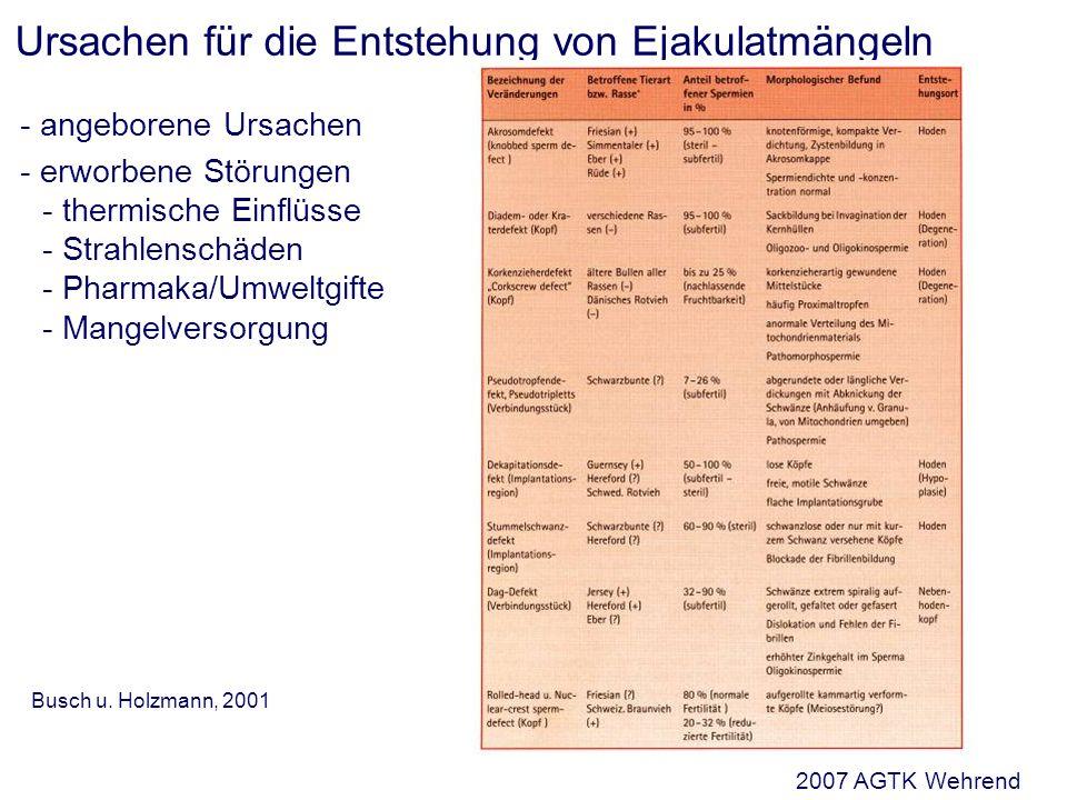 Ursachen für die Entstehung von Ejakulatmängeln - angeborene Ursachen - erworbene Störungen - thermische Einflüsse - Strahlenschäden - Pharmaka/Umweltgifte - Mangelversorgung Busch u.