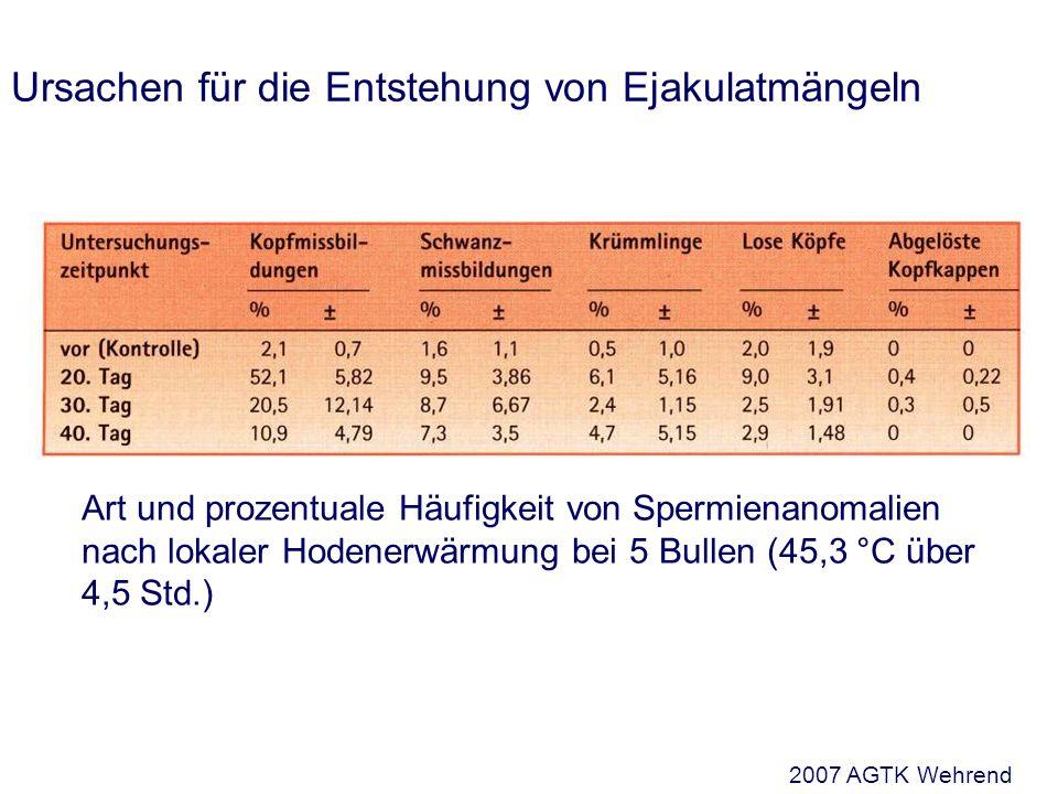 Ursachen für die Entstehung von Ejakulatmängeln Art und prozentuale Häufigkeit von Spermienanomalien nach lokaler Hodenerwärmung bei 5 Bullen (45,3 °C über 4,5 Std.) 2007 AGTK Wehrend