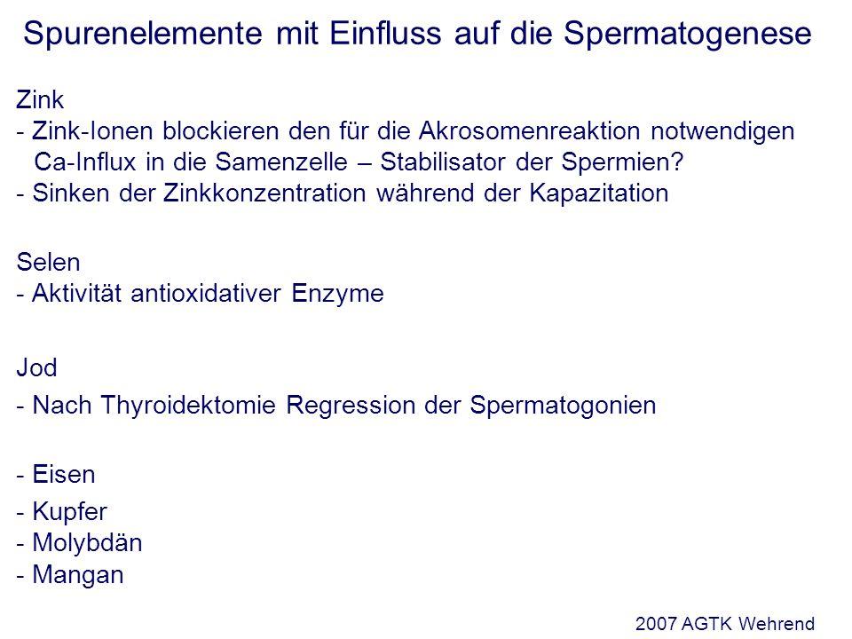 Spurenelemente mit Einfluss auf die Spermatogenese Zink - Zink-Ionen blockieren den für die Akrosomenreaktion notwendigen Ca-Influx in die Samenzelle – Stabilisator der Spermien.