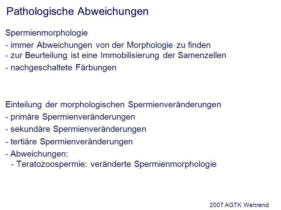 Spermienmorphologie - immer Abweichungen von der Morphologie zu finden - zur Beurteilung ist eine Immobilisierung der Samenzellen - nachgeschaltete Färbungen Einteilung der morphologischen Spermienveränderungen - primäre Spermienveränderungen - sekundäre Spermienveränderungen - tertiäre Spermienveränderungen - Abweichungen: - Teratozoospermie: veränderte Spermienmorphologie Pathologische Abweichungen 2007 AGTK Wehrend