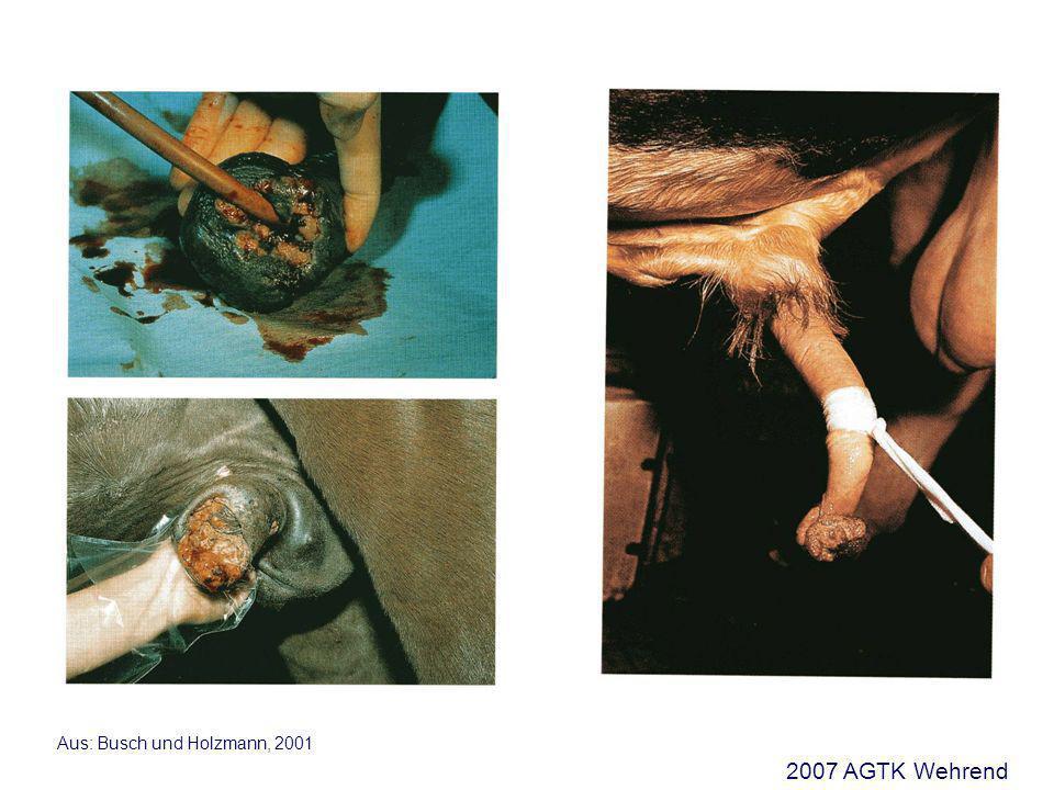 Aus: Busch und Holzmann, 2001 2007 AGTK Wehrend