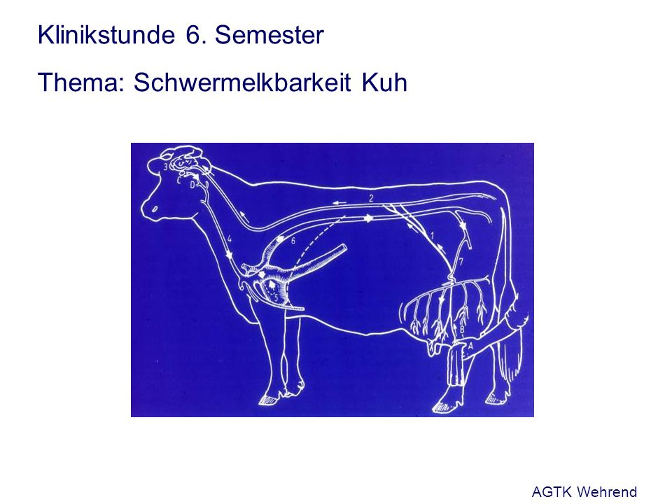 Klinikstunde 6. Semester Thema: Schwermelkbarkeit Kuh AGTK Wehrend