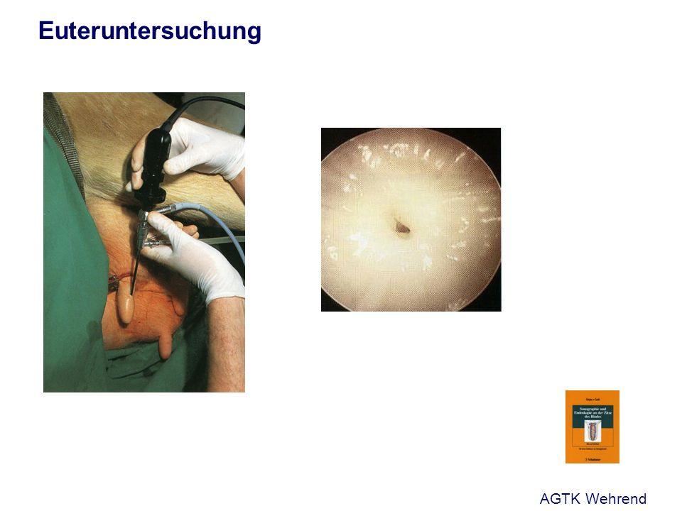 Euteruntersuchung AGTK Wehrend