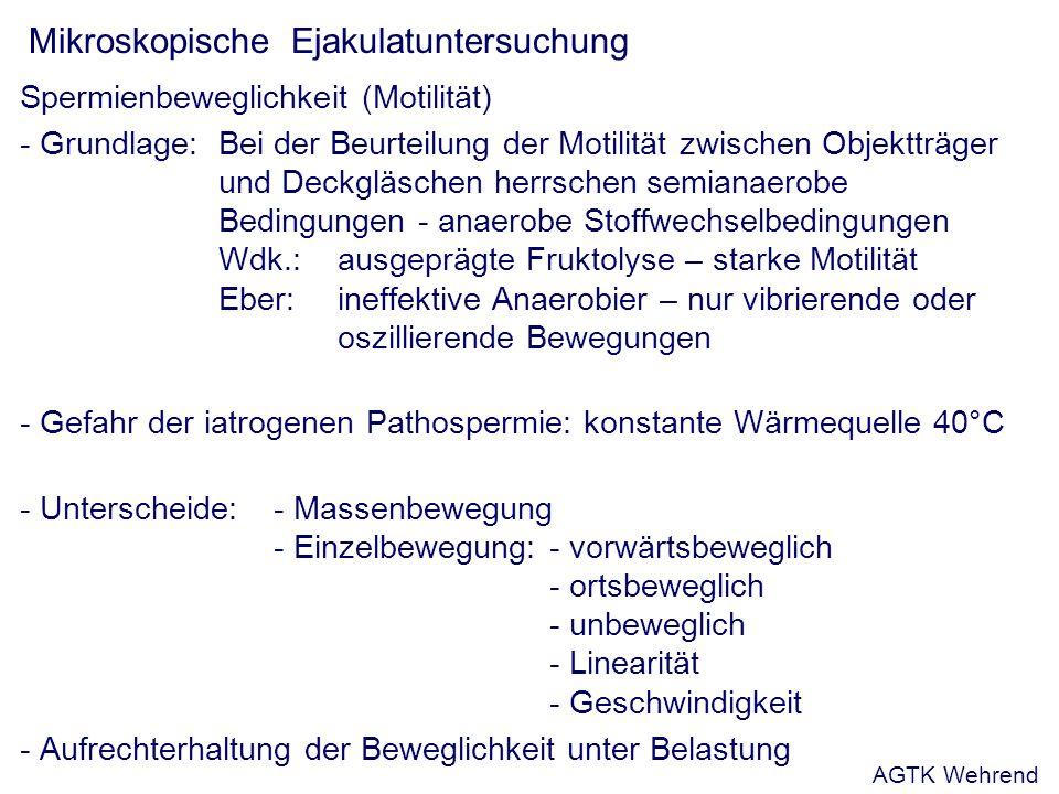 Mikroskopische Ejakulatuntersuchung Spermienbeweglichkeit (Motilität) - Grundlage: Bei der Beurteilung der Motilität zwischen Objektträger und Deckgläschen herrschen semianaerobe Bedingungen - anaerobe Stoffwechselbedingungen Wdk.: ausgeprägte Fruktolyse – starke Motilität Eber:ineffektive Anaerobier – nur vibrierende oder oszillierende Bewegungen - Gefahr der iatrogenen Pathospermie: konstante Wärmequelle 40°C - Unterscheide:- Massenbewegung - Einzelbewegung:- vorwärtsbeweglich - ortsbeweglich - unbeweglich - Linearität - Geschwindigkeit - Aufrechterhaltung der Beweglichkeit unter Belastung AGTK Wehrend