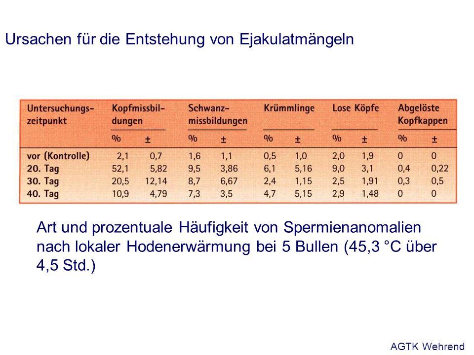 Ursachen für die Entstehung von Ejakulatmängeln Art und prozentuale Häufigkeit von Spermienanomalien nach lokaler Hodenerwärmung bei 5 Bullen (45,3 °C über 4,5 Std.) AGTK Wehrend