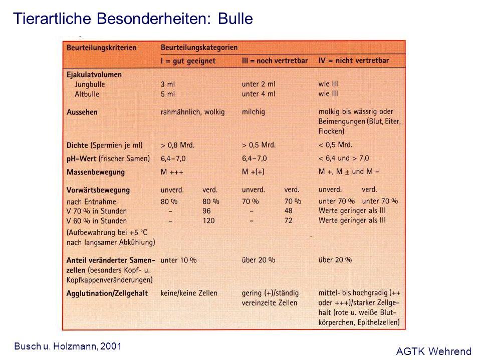 Tierartliche Besonderheiten: Bulle Busch u. Holzmann, 2001 AGTK Wehrend