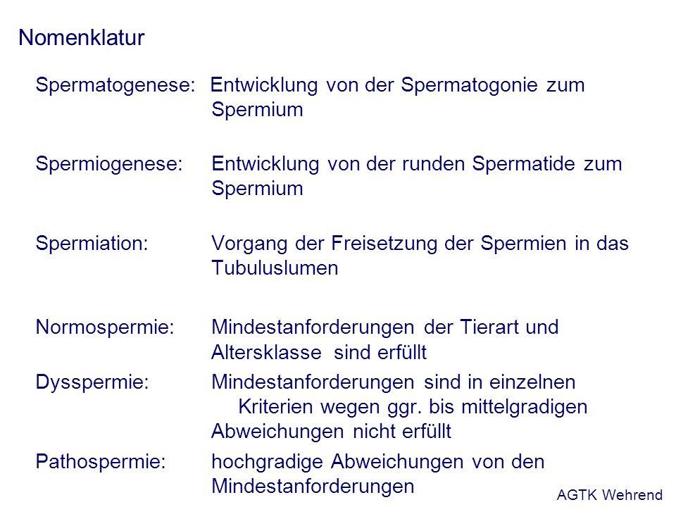 Tierartliche Besonderheiten: Hengst Aurich, 2005 AGTK Wehrend