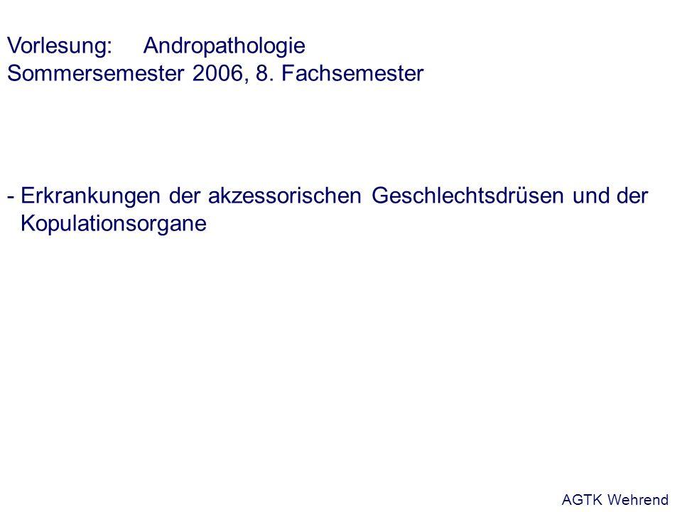 Vorlesung: Andropathologie Sommersemester 2006, 8. Fachsemester - Erkrankungen der akzessorischen Geschlechtsdrüsen und der Kopulationsorgane AGTK Weh