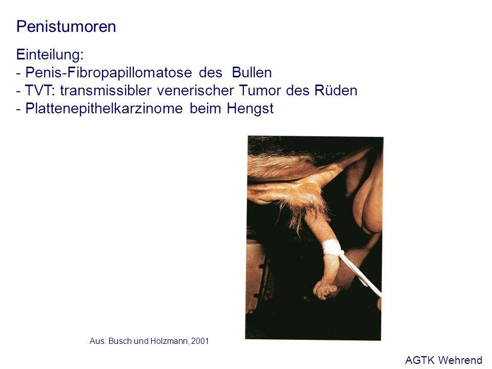 Penistumoren Einteilung: - Penis-Fibropapillomatose des Bullen - TVT: transmissibler venerischer Tumor des Rüden - Plattenepithelkarzinome beim Hengst Aus: Busch und Holzmann, 2001 AGTK Wehrend