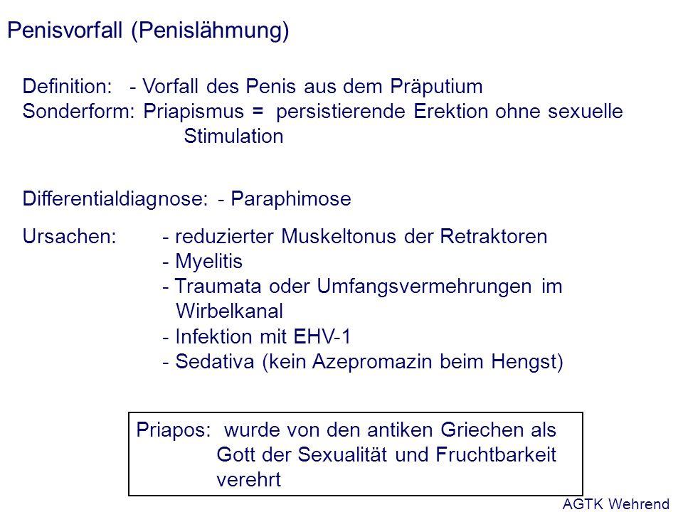 Penisvorfall (Penislähmung) Definition: - Vorfall des Penis aus dem Präputium Sonderform: Priapismus = persistierende Erektion ohne sexuelle Stimulation Differentialdiagnose: - Paraphimose Ursachen:- reduzierter Muskeltonus der Retraktoren - Myelitis - Traumata oder Umfangsvermehrungen im Wirbelkanal - Infektion mit EHV-1 - Sedativa (kein Azepromazin beim Hengst) Priapos: wurde von den antiken Griechen als Gott der Sexualität und Fruchtbarkeit verehrt AGTK Wehrend