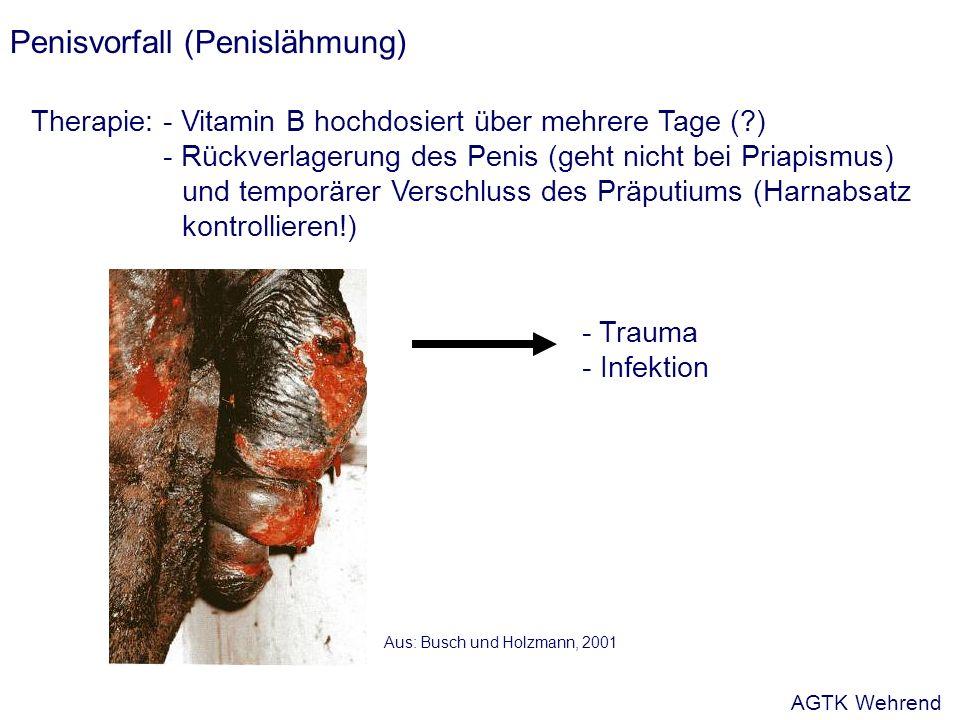 Penisvorfall (Penislähmung) Therapie:- Vitamin B hochdosiert über mehrere Tage (?) - Rückverlagerung des Penis (geht nicht bei Priapismus) und temporärer Verschluss des Präputiums (Harnabsatz kontrollieren!) - Trauma - Infektion Aus: Busch und Holzmann, 2001 AGTK Wehrend